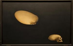 Homolog transformation af et kranium